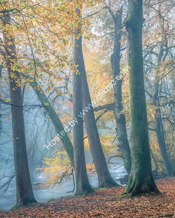 136 Autumn Mist On The River Teifi