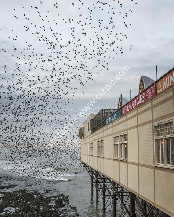 184 A Vortex Of Starlings At Aberystwyth