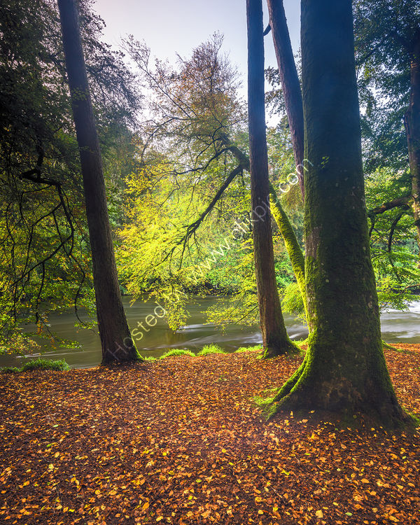 200 Henllan In Autumn