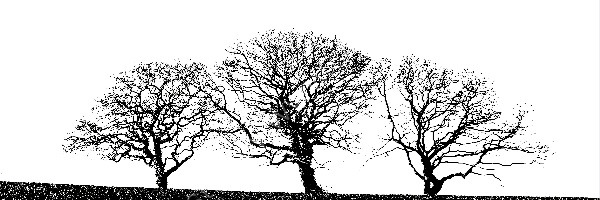 23 Trees In Pembrokeshire