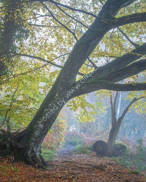 30 A Woodland Walk