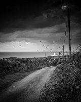 40 The Storm Crows Of Strumble Head