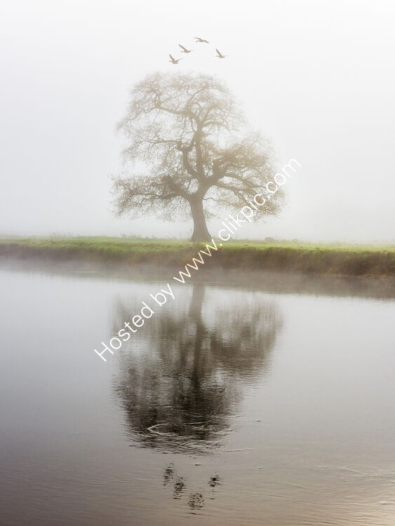 49 Tree Geese And Fog In The Towy Valley
