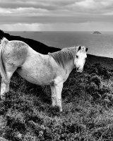 87 Wild Pony St David's Head
