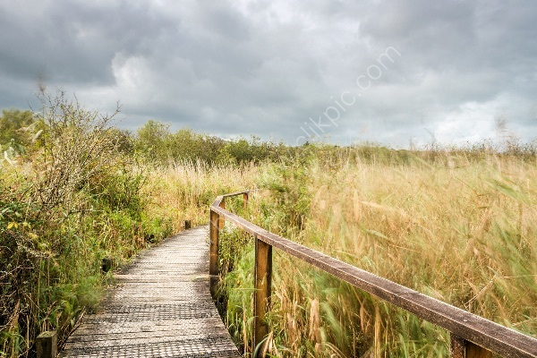 89 Teifi Boardwalk II