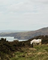 97 From St David's Head To Strumble Head