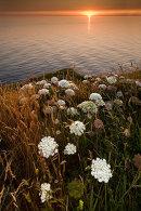 Cliff top flora at sunset