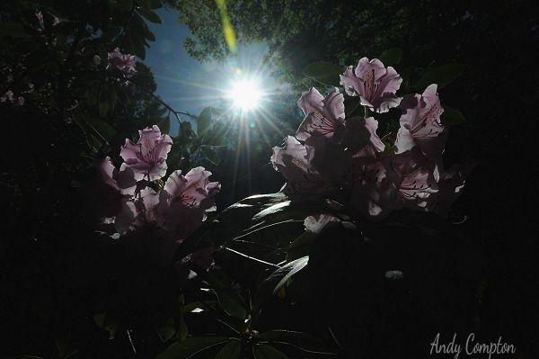 Light Through The Lockdown A
