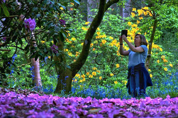Capturing the colours in Park Wood