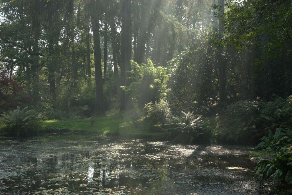Summertime in Park Wood