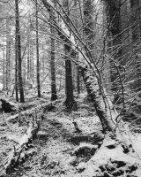 Inverie woods