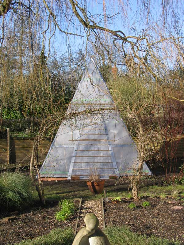 greenhouse made from a bamboo structure