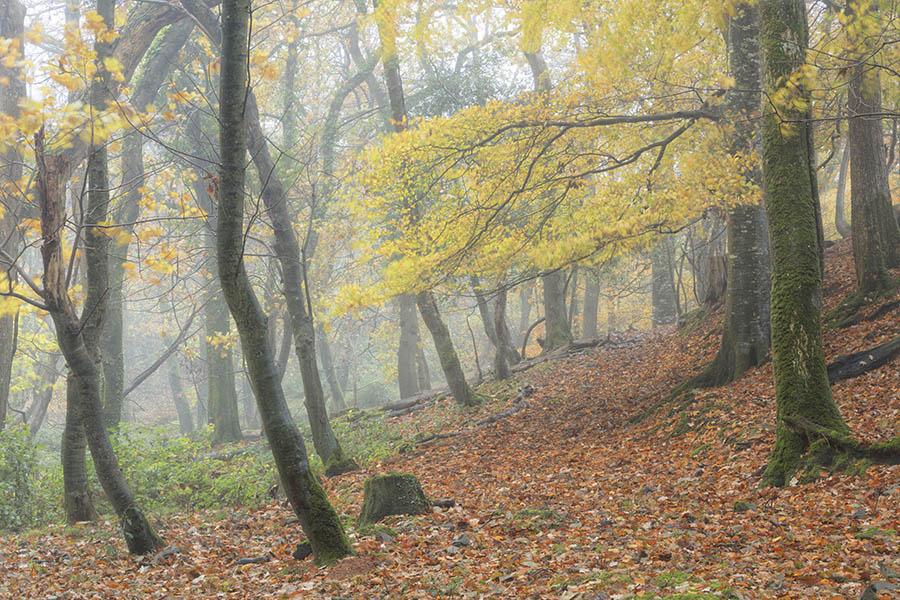 Misty Morning Hartland Vale.