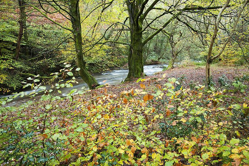 West Lyn Autumn