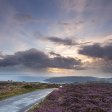 Heather On Porlock Common