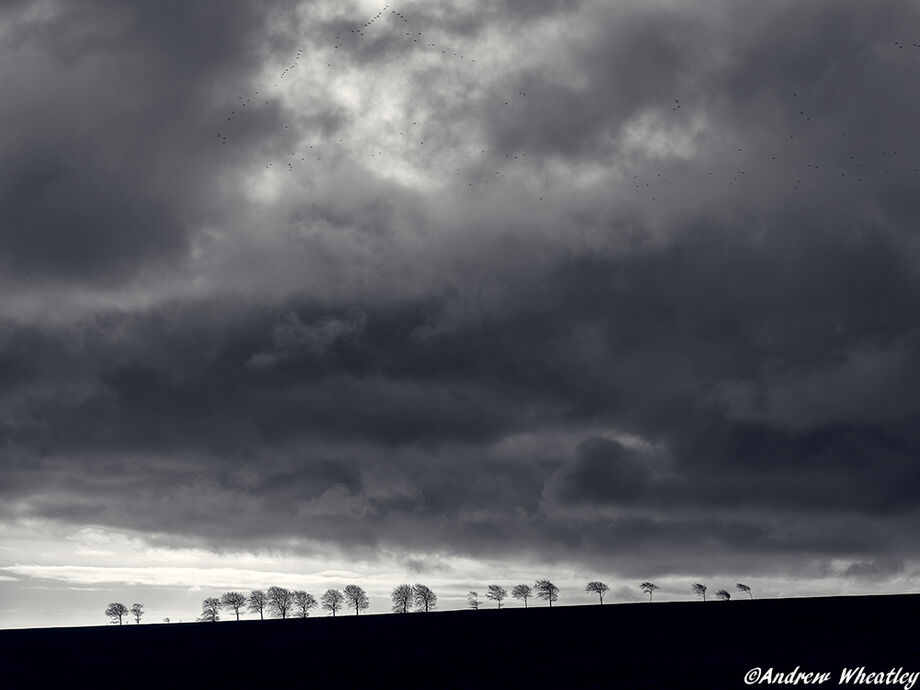 A line of beech trees on the horizon as storm clouds move overhead