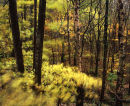 Blustery Afternoon, Mercyfield Wood
