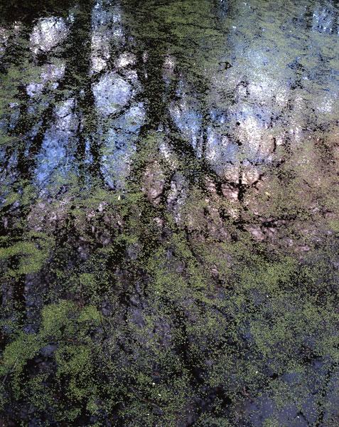Algae & Reflections