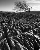 Ash Tree & Ingleborough, Newbiggin Crags