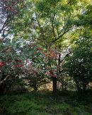 Ash and Rowan, Wharfe Wood