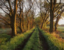 Astley Moss Approach