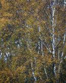 Autumn Foliage, Whitbarrow