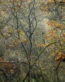 Autumn, Hazelhurst Wood, 01