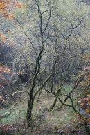 Autumn, Hazelhurst Wood, 03