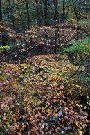 Autumn, Hazelhurst Wood, 04