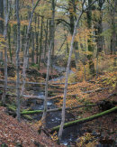 Noughts & Crosses, Autumn