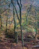 Autumn, Roddlesworth Woods 01