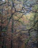 Autumn, Roddlesworth Woods 02