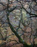 Autumn, Roddlesworth Woods 03