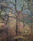 Autumn, Roddlesworth Woods 04