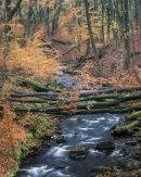 Autumn, River Roddlesworth 01