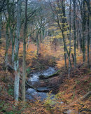 Autumn, River Roddlesworth 02
