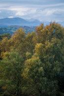 Autumn Trees, Lakeland Fells, Whitbarrow