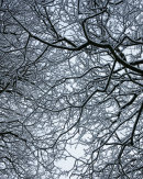 Branches, 01