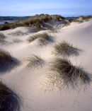 Dunes, Budle Bay