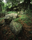 Boulders, Cringlebarrow Woods