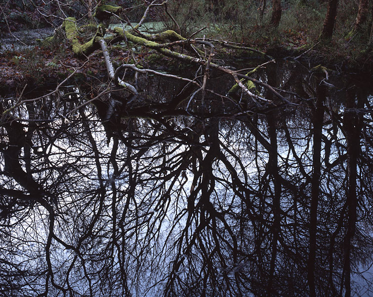 Dark Pool, Roddlesworth