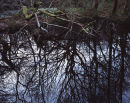 Dark Pool, Roddlesworth