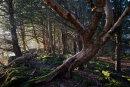 Cringlebarrow Wood
