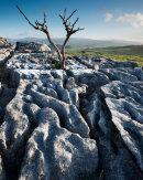 Dead Tree, Newbiggin Crags