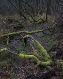 Decay, Longworth Clough