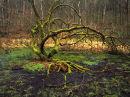 Deepdale Pond