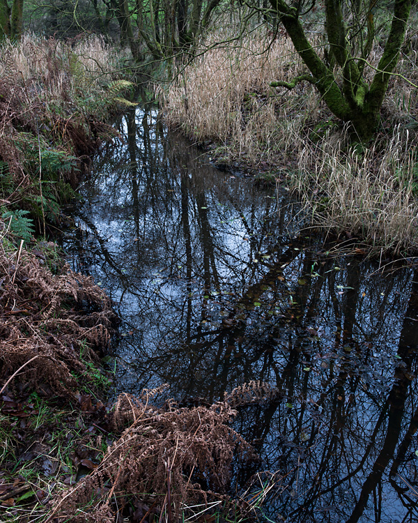 Drainage Ditch, Longworth Clough