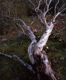 Fallen Tree, Oxenber Wood