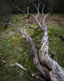 Fallen Tree, Oxenber