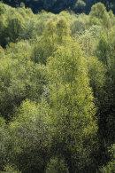 Fresh Foliage, Cox Green
